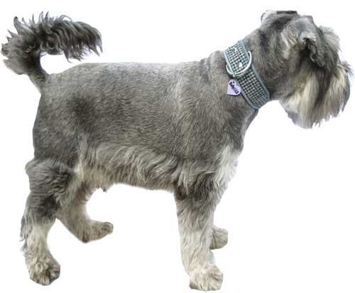 Harris Tweed Dog Collar Collection - Holly & Lil Collars Handmade in Britain, Leather dog collars, leads & Dog harnesses.
